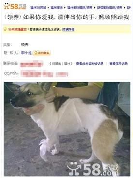 关爱动物行动 58同城呼吁救助流浪动物